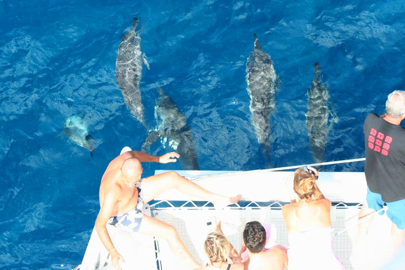 Catamaran trips with dolphin watching in Mauritius